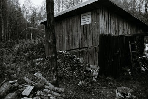 Imagine de stoc gratuită din abandonat, afară, arbore