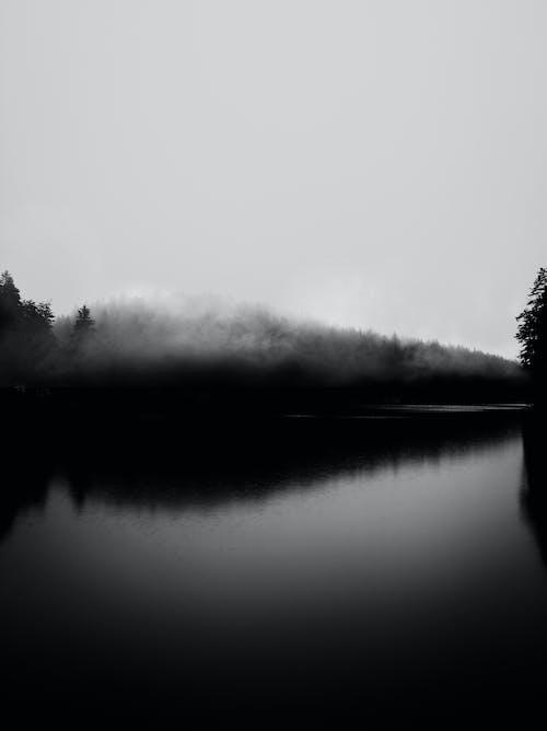 Grayscale Photo of Trees Near Lake