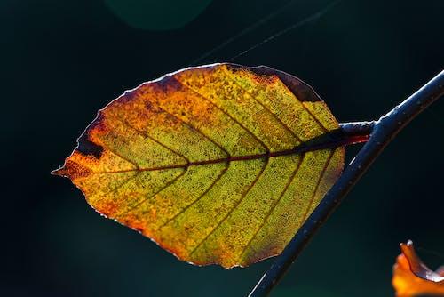 Photos gratuites de feuilles d'automne