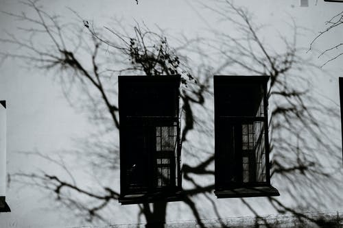 Black and white of aged building exterior with window shutters and shade of wavy tree branches in city
