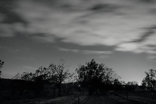 Δωρεάν στοκ φωτογραφιών με ασπρόμαυρη φωτογραφία, αστέρια, μεγάλο δέντρο