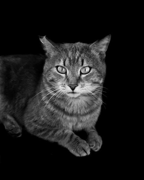 en az, evcil, gündelik yaşam, kedi gözü içeren Ücretsiz stok fotoğraf