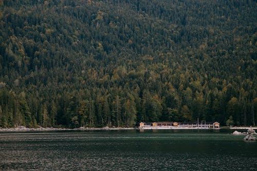 Fotos de stock gratuitas de agua, árbol, armonía