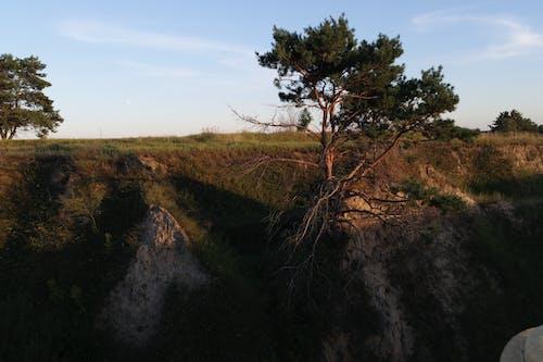 Foto d'estoc gratuïta de a l'aire lliure, aigua, alba, arbre