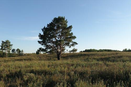 下落, 乾草地, 乾草田, 原本 的 免费素材图片