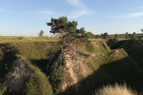 Ingyenes stockfotó domb, fa, fű, környezet témában