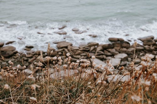Rocky coast with green plants on shore