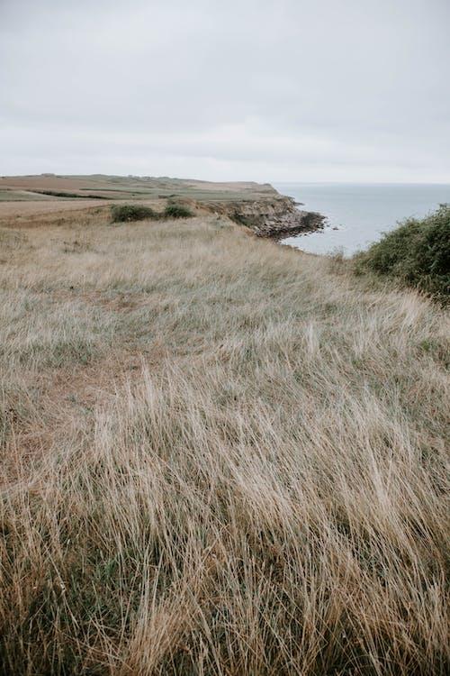 Lonely grassy field on seashore
