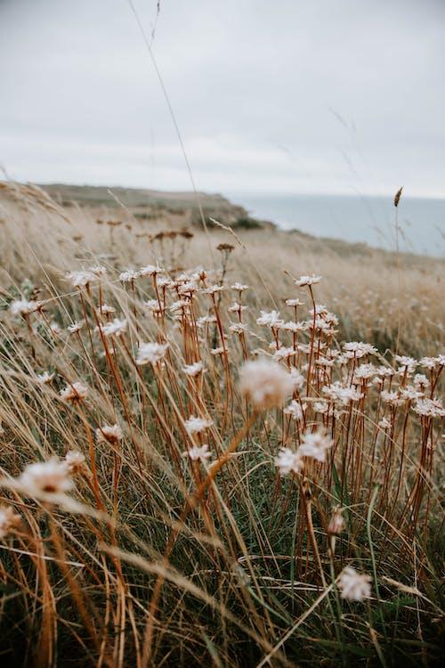 Grassy meadow on ocean shore