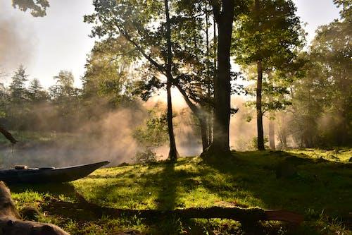 Darmowe zdjęcie z galerii z drzewa, jasny, malowniczy, mglisty