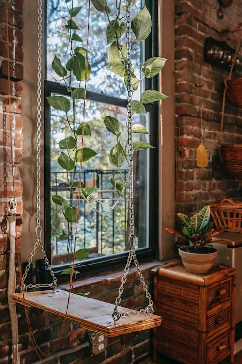 Balançoire Avec Plante Rampante Dans La Vieille Maison