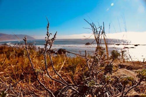 カリフォルニアの海岸, ロストコースト, 丘, 低い雲の無料の写真素材