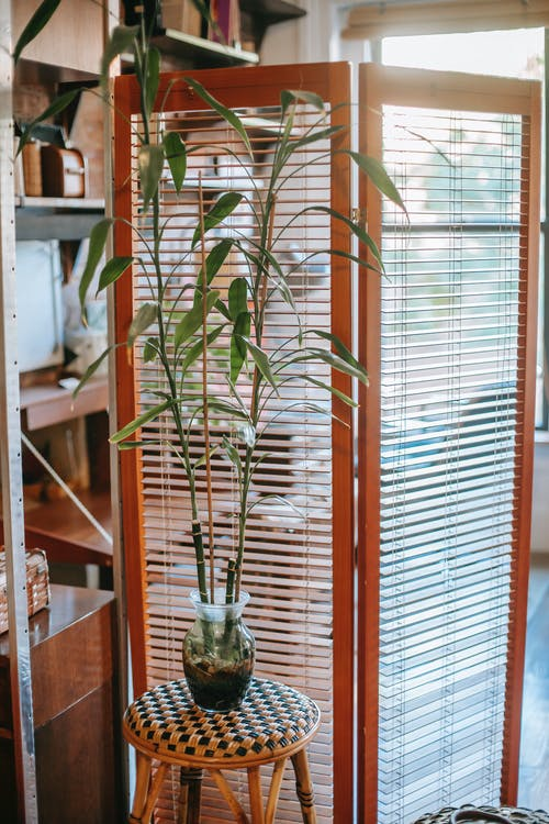 Interior of cozy apartment with tall green plant placed on chair near folding screen in daylight