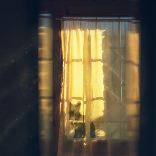 Darmowe zdjęcie z galerii z kot, pokój, zasłony, żółty