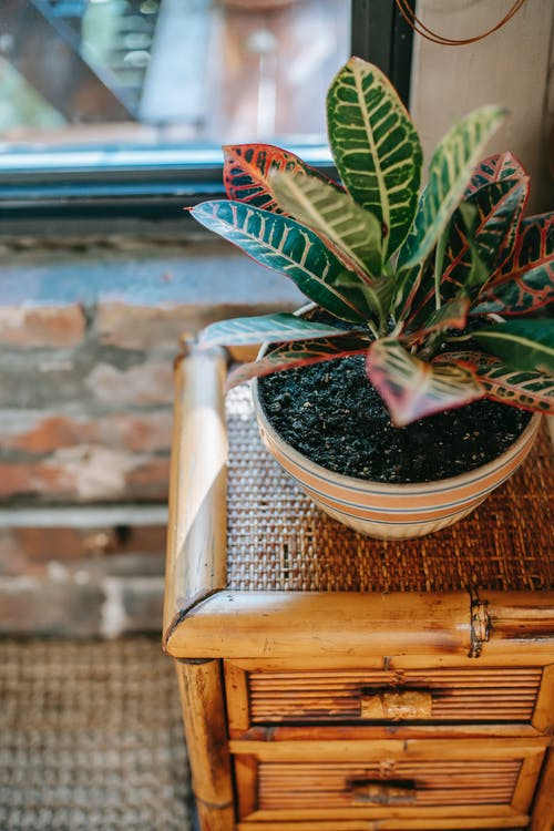 From above of green ficus plant growing in ceramic pot placed on wooden nightstand with wicker surface near window in old fashioned room