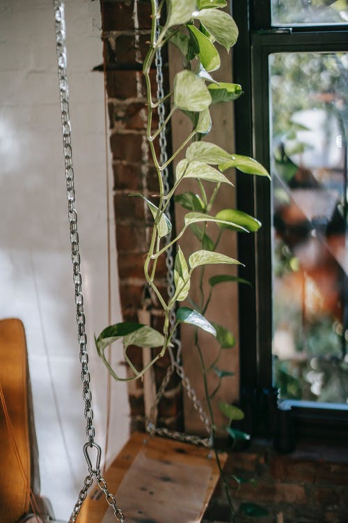 Wooden swing near plant in room