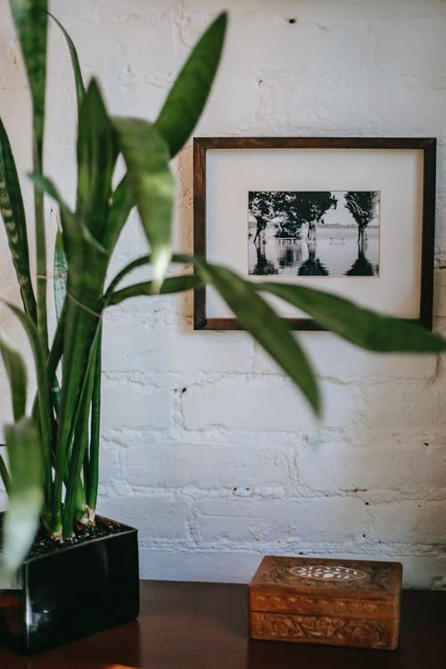 Cozy room with plant and picture