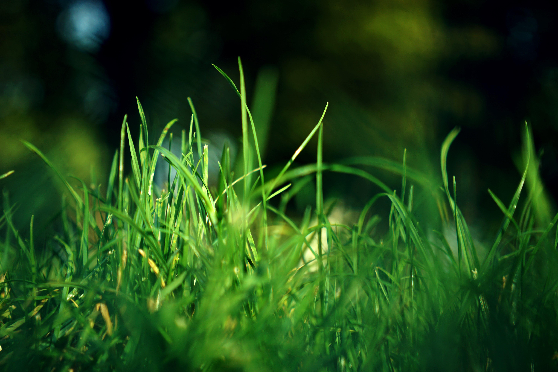alan, alan derinliği, Bahçe, büyüme içeren Ücretsiz stok fotoğraf