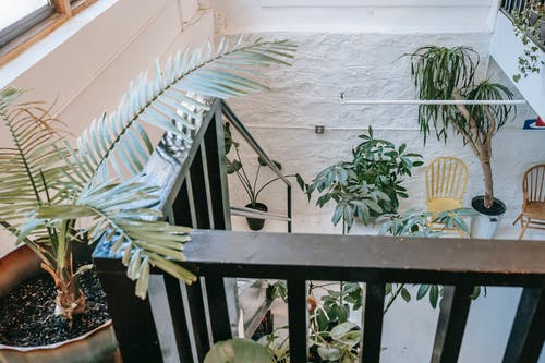 Staircase with wooden railing decorated with plants in light modern house