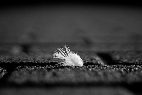 Fotos de stock gratuitas de blanco y negro, efecto desenfocado, macro