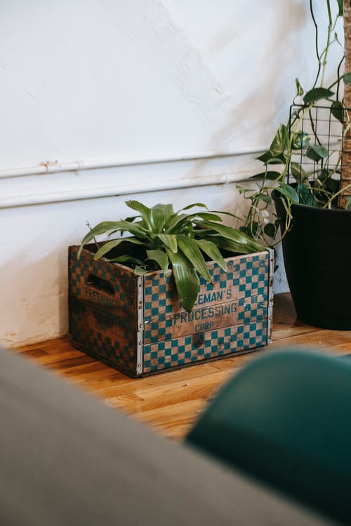 Green potted plant in modern apartment