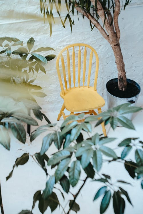 Wooden chair near large potted plant