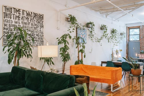 Room interior with cozy sofas on floor and potted creeping plants on wall in house