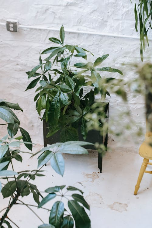 Assorted potted plants on white floor in patio
