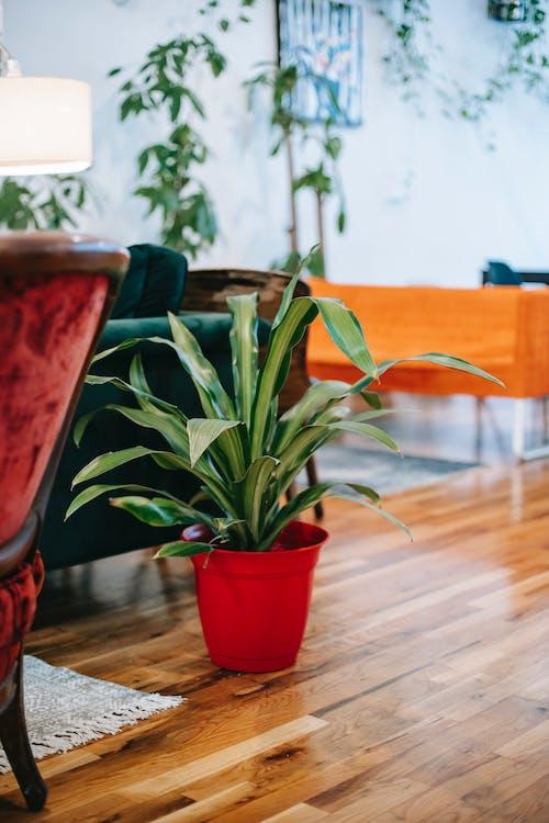 リビングルームの寄木細工の床に鉢植えの植物