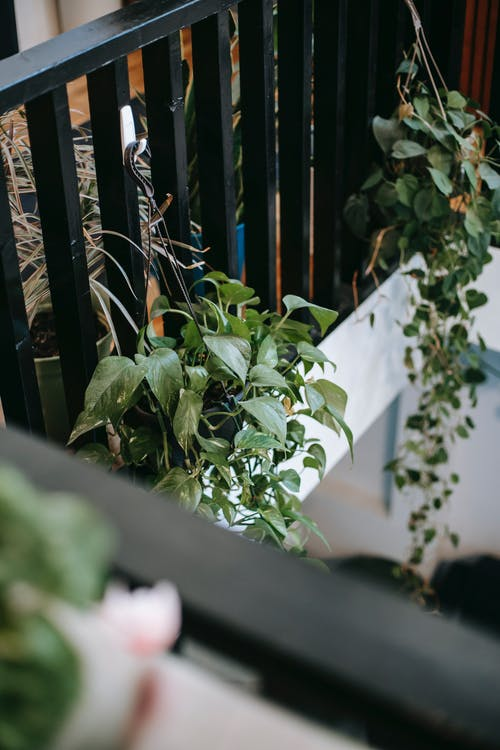 Assorted creeping plants on terrace fence in summer