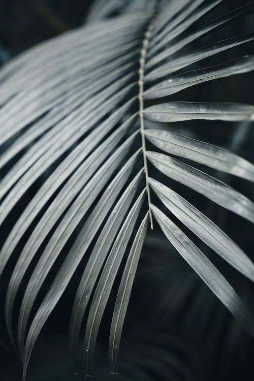 Foto profissional grátis de caule, close, folhas de palmeira