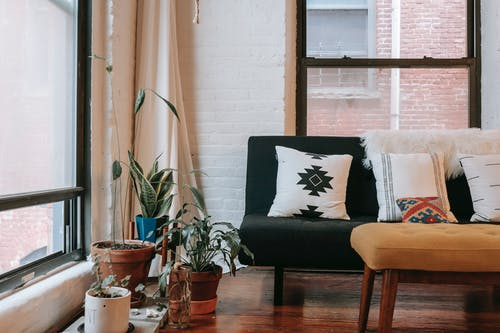 Soft couch placed near potted plants