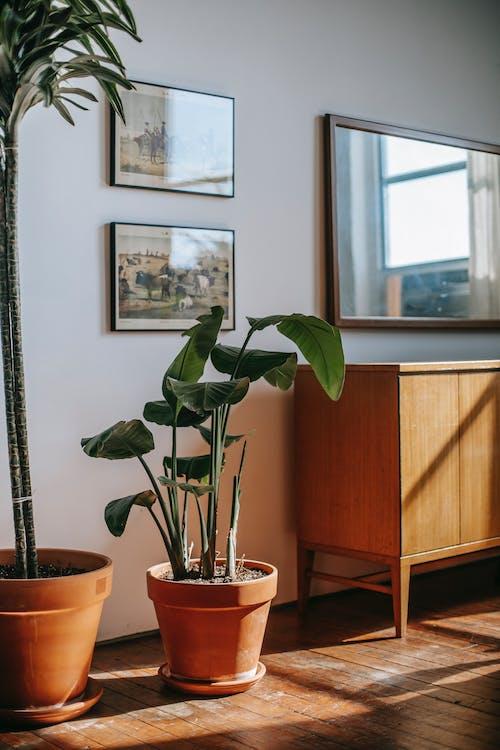 Plantas Em Vasos Perto Da Parede Com Fotos Em Uma Sala Iluminada
