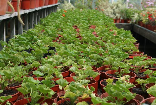 Green Plants on Red Pots