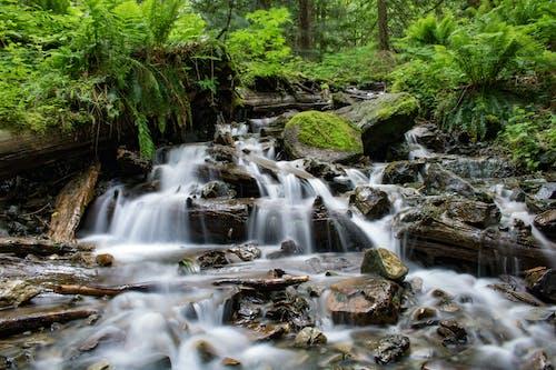 Fotobanka sbezplatnými fotkami na tému kaskáda, lesy, mach, malebný