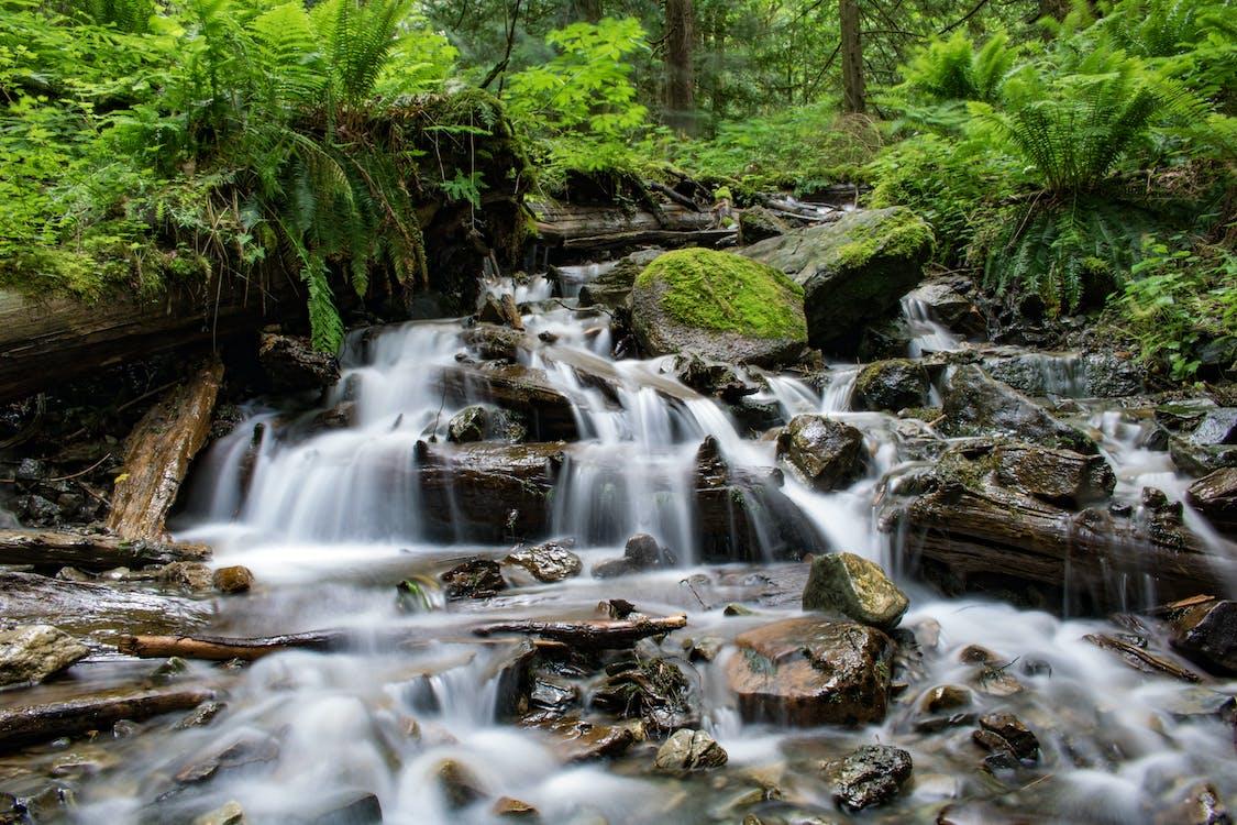 a l'aire lliure, aigua, bosc
