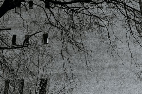 Dry tree branches against old masonry building