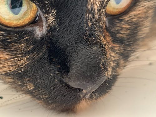 Muzzle of cat with yellow eyes