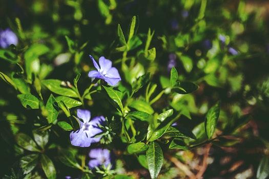 Green leaves & purple flowers