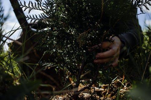 人, 匿名, 嗜好, 園丁 的 免費圖庫相片