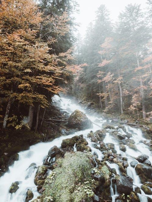 Immagine gratuita di alberi, ambiente, autunno