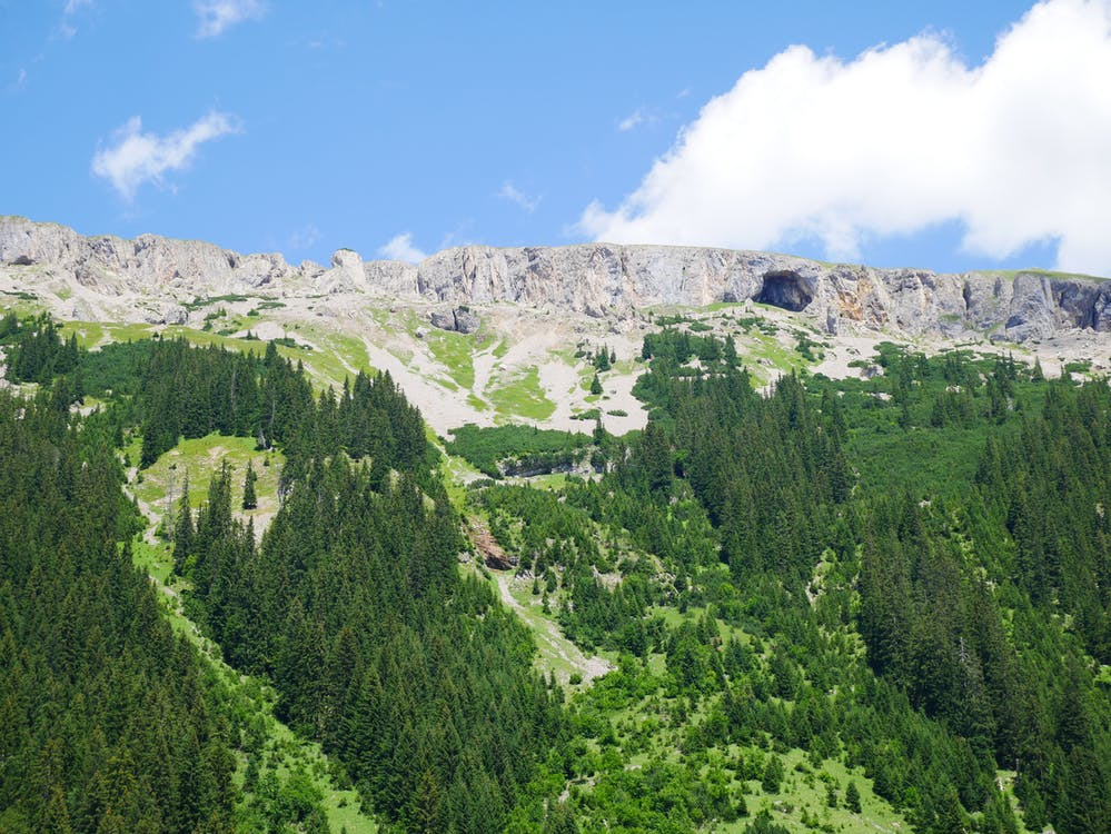 Mountain Valley and Pine Trees