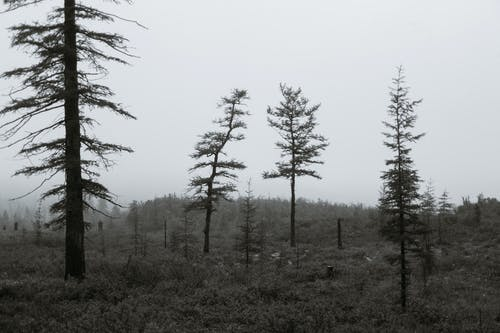 Leafless trees in misty forest under cloudy sky