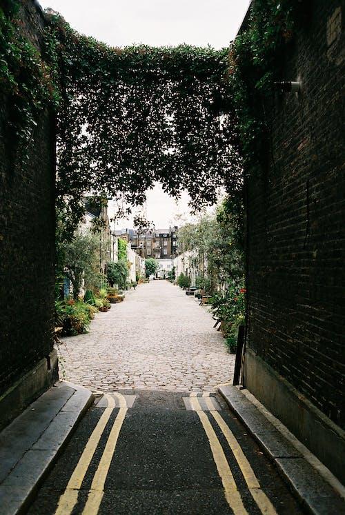 Foto d'estoc gratuïta de arquitectura, carrer, edifici, mur
