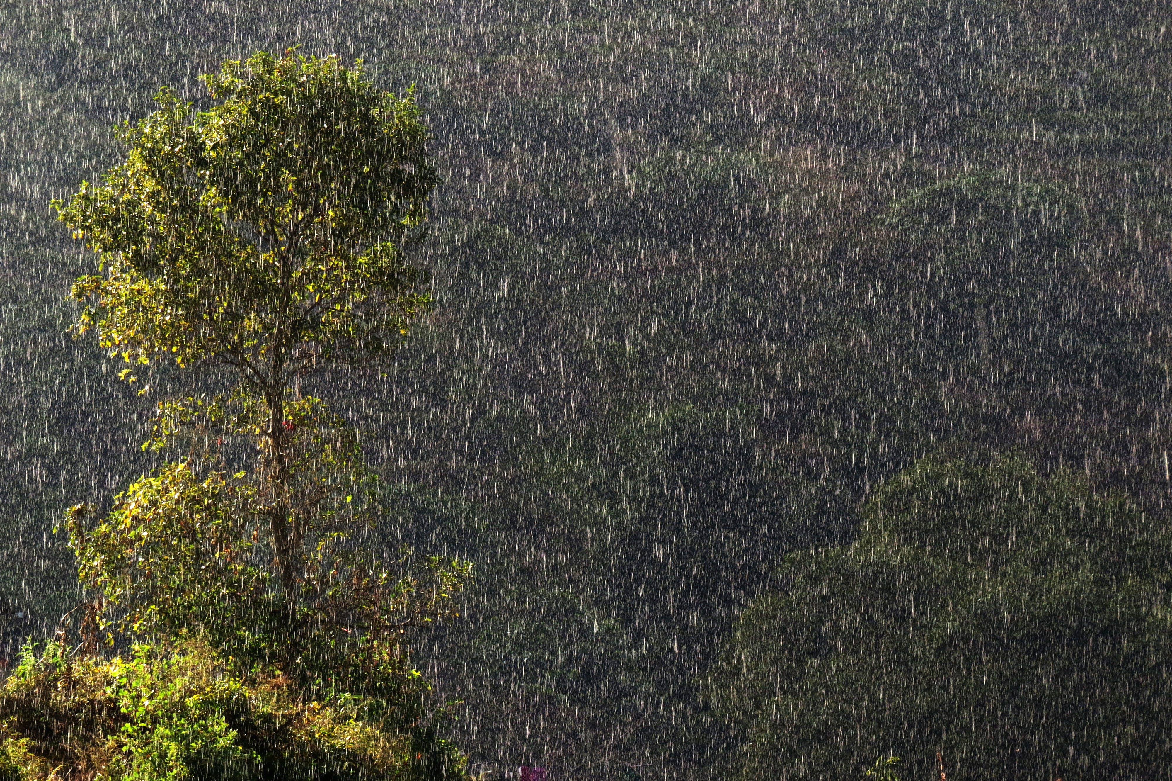 Free stock photo of bandipur, drops, green, mountain