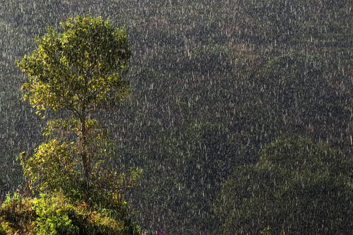 Imagine de stoc gratuită din apă, arbore, bandipur, munte