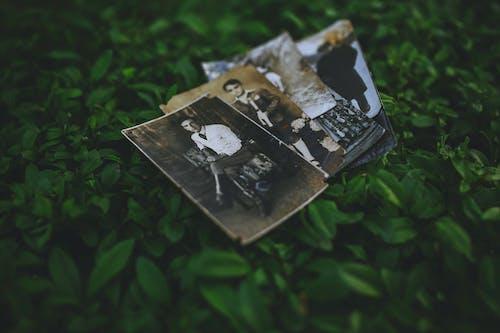 Darmowe zdjęcie z galerii z fotografie, liście, staroświecki, stary