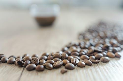 Základová fotografie zdarma na téma káva, kávová zrna, kofein, ostření