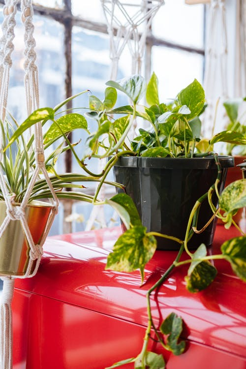 Immagine gratuita di agricoltura, basilico, crescita