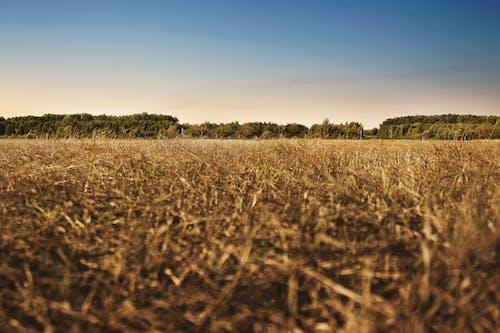 Gratis lagerfoto af afgrøder, agerjord, gård, himmel